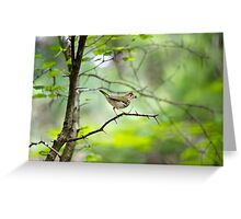 Spring Forest Greeting Card