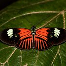 Pattern in WIngs  by vasu