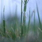 Grass Level... (Free State, South Africa) by Qnita