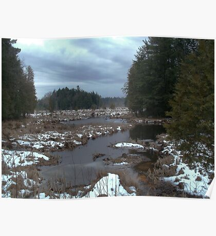 Cold Spring Brook State Forest Poster
