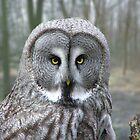 Owl  by Daniel Loxley Warwood