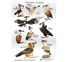 Vultures of India Poster