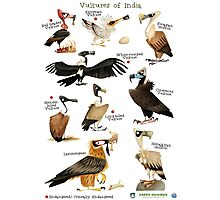 Vultures of India Photographic Print