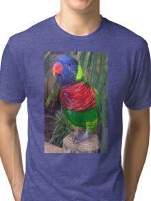 Rainbow Lorikeet Tri-blend T-Shirt
