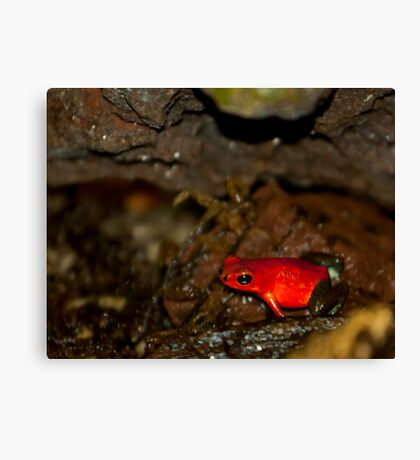 Red Dart! Canvas Print