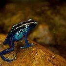 Blue Dart! by vasu