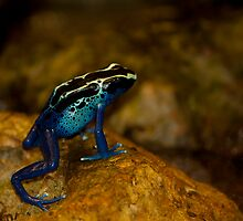 Blue Dart! by vasu
