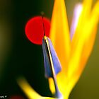 Abstracted Bird of Paradise by tigerwings