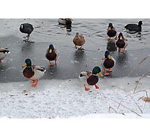 Cusworth park pond & it's inhabitants Photographic Print