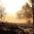 Shot in the fog by Willem Hoekstra