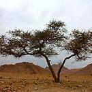 double tree by yvesrossetti