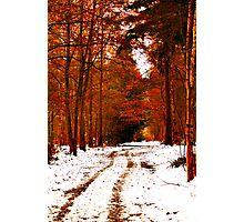 Autumnal Winter Photographic Print