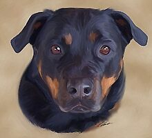 Storm The rotty by Cazzie Cathcart