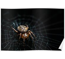 Spider on the Web  Poster