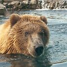 """Grizzled"" - Grizzly Bear playing in water by John Hartung"