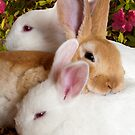 """The Bunny Bunch"" - rabbits snuggling by John Hartung"