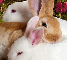 """The Bunny Bunch"" - rabbits snuggling by John Hartung"