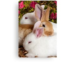 """The Bunny Bunch"" - rabbits snuggling Canvas Print"