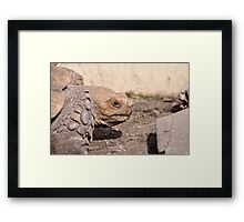 The Eye of a Turtle Framed Print