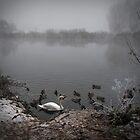 Misty Morn by Jonathan Fletcher