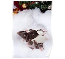 Four Christmas Ratties Poster