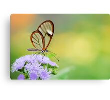 Clear Wing Butterfly Canvas Print