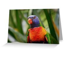 Colourful Rainbow Lorikeet Greeting Card