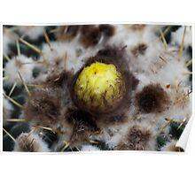 Cactus bud Poster