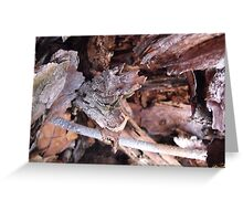 Inside a hollow tree Greeting Card