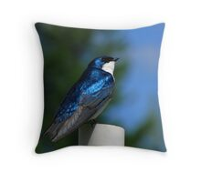 Tree Swallow on PVC Pipe Throw Pillow