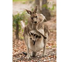 Kangaroo, just having a scratch! Photographic Print