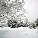 Snow in California by Shulie1