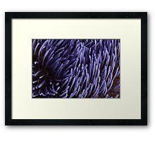 Artichoke flower Framed Print