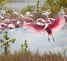 """The Fly In'' - Roseate Spoonbills by John Hartung"