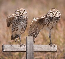 """Put Your Right Foot Out"" - burrowing owls by John Hartung"