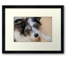 """Doggy Eyes"" Framed Print"