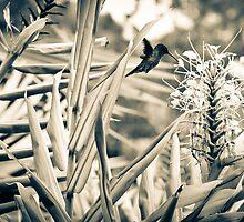 Hummingbird I by Camila Bruce Photography