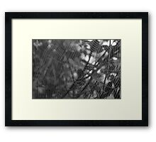 a Spiders world Framed Print