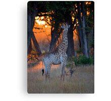 Botswana Wildlife #2 - Giraffe Canvas Print