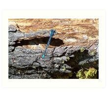 a very blue dragon fly Art Print