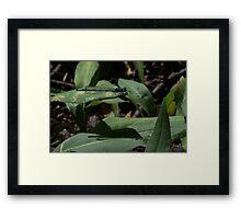 dragon fly on a leaf Framed Print