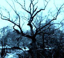 Old Tree in Black Creek Gorge in Blue by Charldia