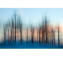 Winter Trees at Dawn Photographic Print