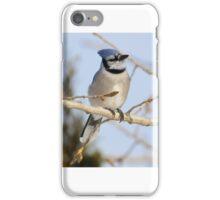Winter Blue Jay iPhone Case/Skin
