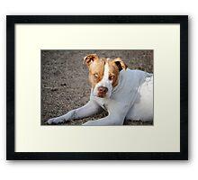 Beautiful Bulldog Framed Print