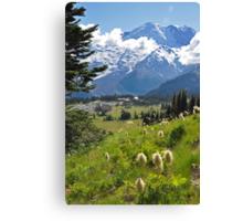Mt. Rainier Anemones in the Sun Canvas Print