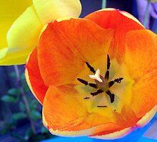Tulips on Blue Background by Angela Gannicott