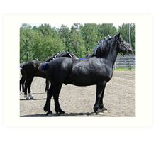 Proud Sire And His Mares Art Print