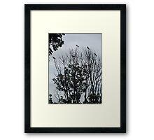 Corvid Crown Framed Print