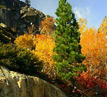 """""""Fall Spectacular"""" by Lynn Bawden"""